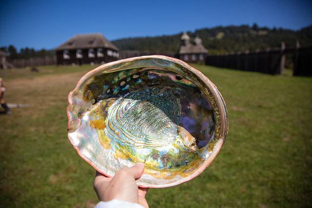 una conchiglia di abalone